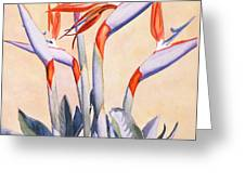 Birds Of Paradise Greeting Card by Mary Helmreich