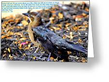 Birds Of The Air Greeting Card