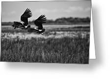 Birds Of The Wetlands V12 Greeting Card