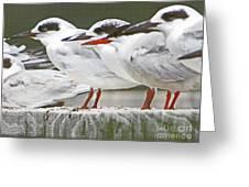 Birds On A Ledge Greeting Card