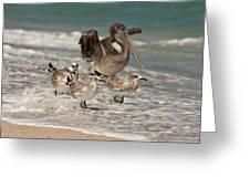 Birds On The Beach Greeting Card