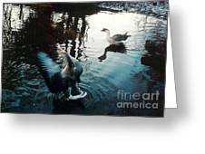 Birds On The Mill Pond Greeting Card