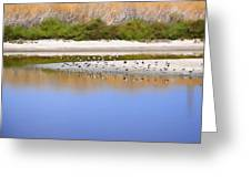 Birds On The River Bank Greeting Card