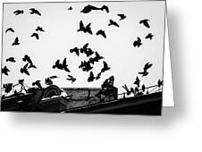 Birds Over City - Featured 3 Greeting Card
