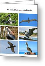 Birds - Pelicans - Boxed Cards Greeting Card