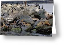 Birds Seals And Sea Lions Greeting Card