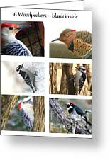Birds - Woodpeckers - Boxed Cards Greeting Card