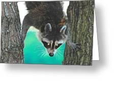 Birdseed Bandit Greeting Card