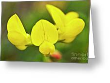 Birdsfoot Trefoil In The Meadows Greeting Card by Heiko Koehrer-Wagner