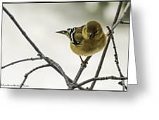 Birdy Birdy Goldfinch Greeting Card