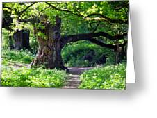 Birnam Wood Scotland Greeting Card