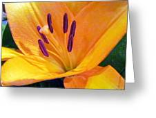 Birthday Lily. Greeting Card