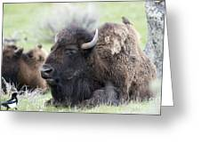 Bison And Birds Greeting Card