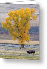 Bison And Cottonwood Greeting Card