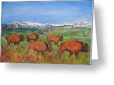 Bison At Yellowstone Greeting Card