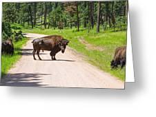 Bison Blocking The Road Greeting Card