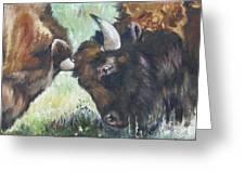 Bison Brawl Greeting Card