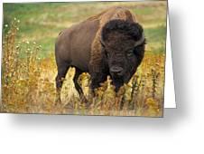 Bison Buffalo Greeting Card