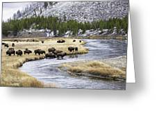 Bison By The Madison Greeting Card