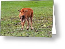 Bison Calf In The Flowers Yellowstone National Park Greeting Card