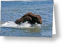 Bison Calf Running After Mama In Yellowstone National Park Greeting Card