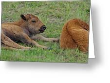 Bison Calves  Greeting Card