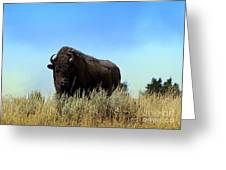 Bison Cow On An Overlook In Yellowstone National Park Greeting Card