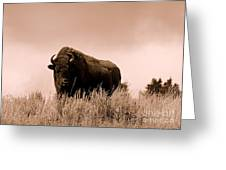 Bison Cow On An Overlook In Yellowstone National Park Sepia Greeting Card