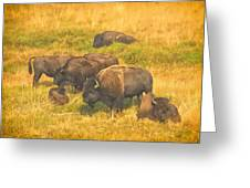Bison Family Greeting Card