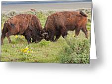 Bison Fight In Grand Teton National Park Greeting Card