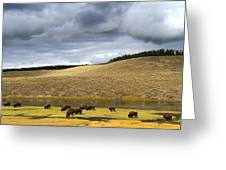 Bison Grazing Along The Yellowstone River In Hayden Valley Greeting Card