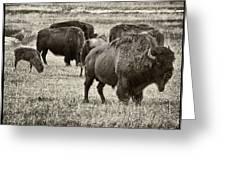 Bison Herd Bw Greeting Card