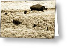 Bison Herd Greeting Card