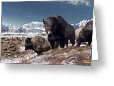 Bison Herd In Winter Greeting Card