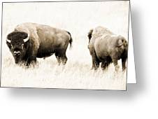 Bison II Greeting Card