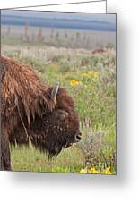 Bison In The Flowers Ingrand Teton National Park Greeting Card