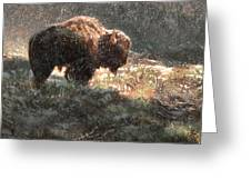 Bison In The Snow Greeting Card by Aaron Blaise