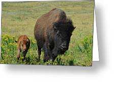 Bison Mother And Calf Greeting Card