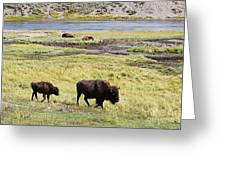 Bison Mother And Calf In Yellowstone National Park Greeting Card