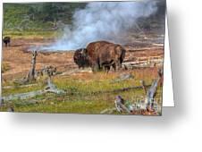 Bison Mud Greeting Card