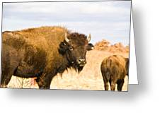 Bison On Tall Grass Iv Greeting Card