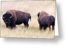 Bison Painting Greeting Card