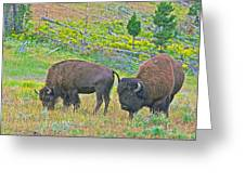 Bison Pair In Hayden Valley In Yellowstone National Park-wyoming  Greeting Card