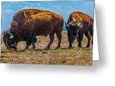 Bison Pair_1 Greeting Card by Tom Potter