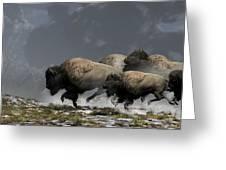 Bison Stampede Greeting Card