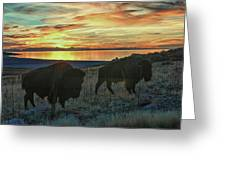 Bison Sunset Greeting Card