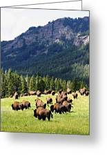 Bison Valley Greeting Card