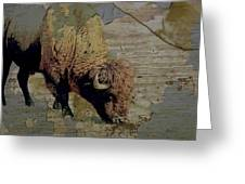 Bison Vintage Style -photo- Art Greeting Card by Ann Powell