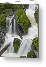 Bits Of The Forest In A Mount Tam Cascade Greeting Card