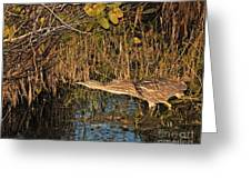 Bittern Stretched Out Greeting Card